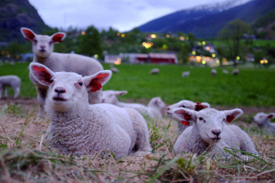 ad agencies like lambs led to the slaughter